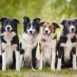 sterilisation af hund hvornår
