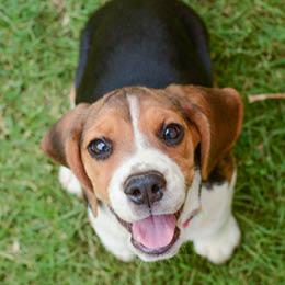 3 tips - Sådan træner du din hund træt: